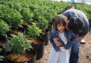 Wpływ medycznej marihuany na częstość napadów padaczkowych. Wywiad z prof. Davidem Neubauerem