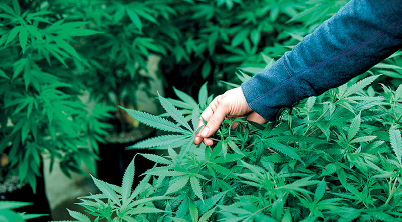 Szwajcarska legalizacja w trybie testowym