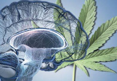 CBD dla prawidłowego ukrwienia mózgu